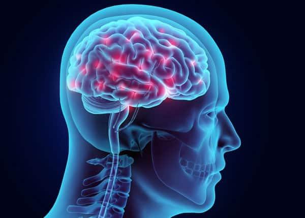 3d image of human brain inside skull